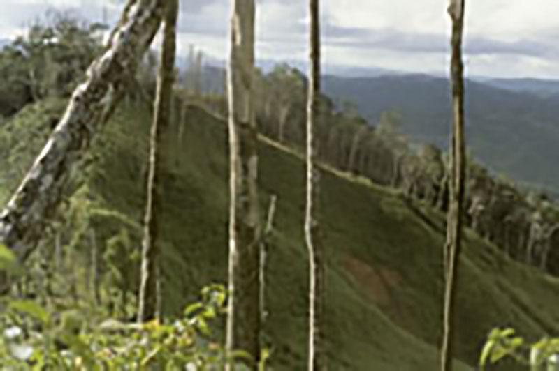 Nachhaltige Waldwirtschaft in den Tropen – Möglichkeiten und Illusionen