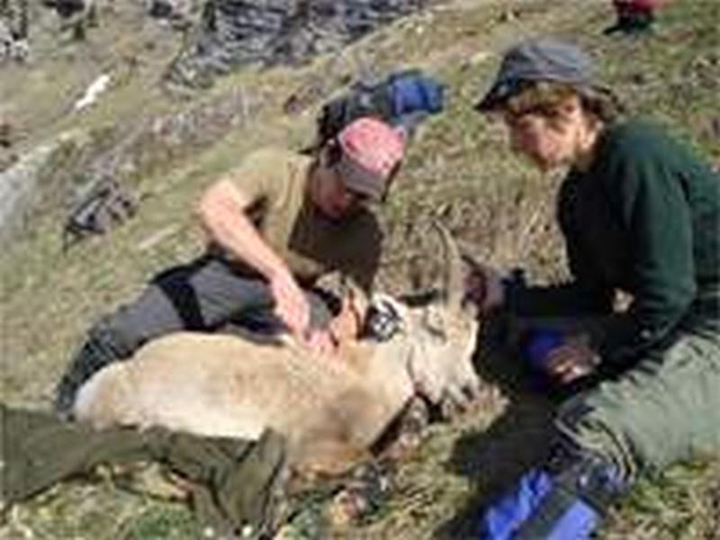Krankheiten bei freilebenden Wildtieren – Natürliche Bestandesregulation oder Bedrohung für Mensch und Tier?