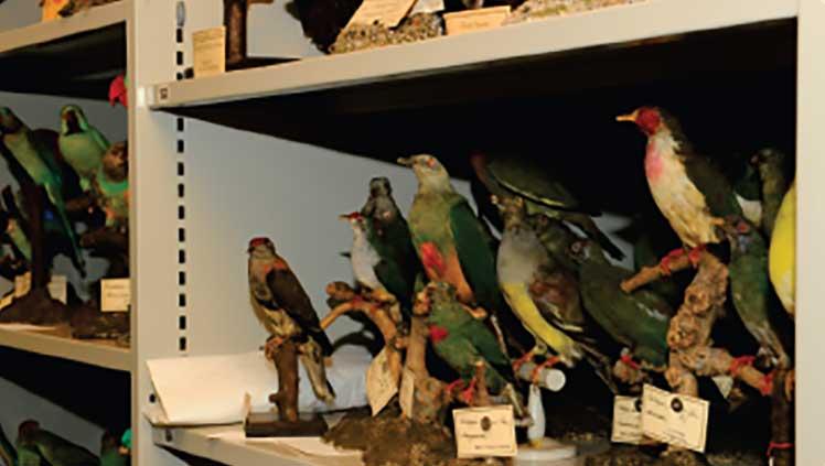 Blick hinter die Kulissen des Naturmuseums (mit anschliessender GV)