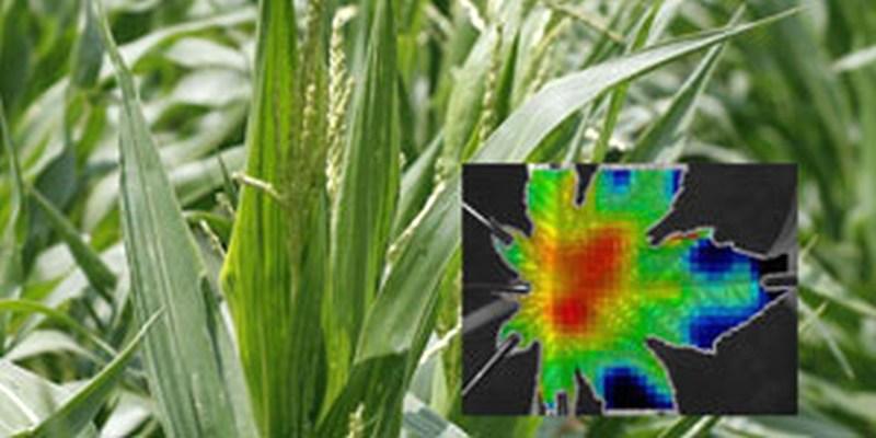 Fest verwurzelt und doch hoch dynamisch – Neuer Blick auf das Pflanzenwachstum dank Bildverarbeitung
