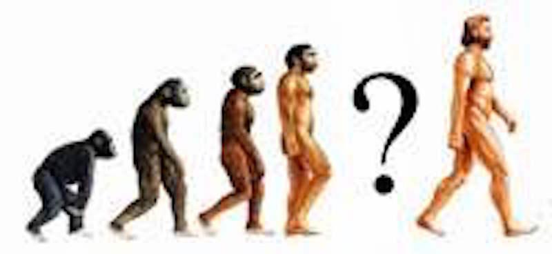 Der Australopithecus sediba als Bindeglied in der Menschheitsforschung?
