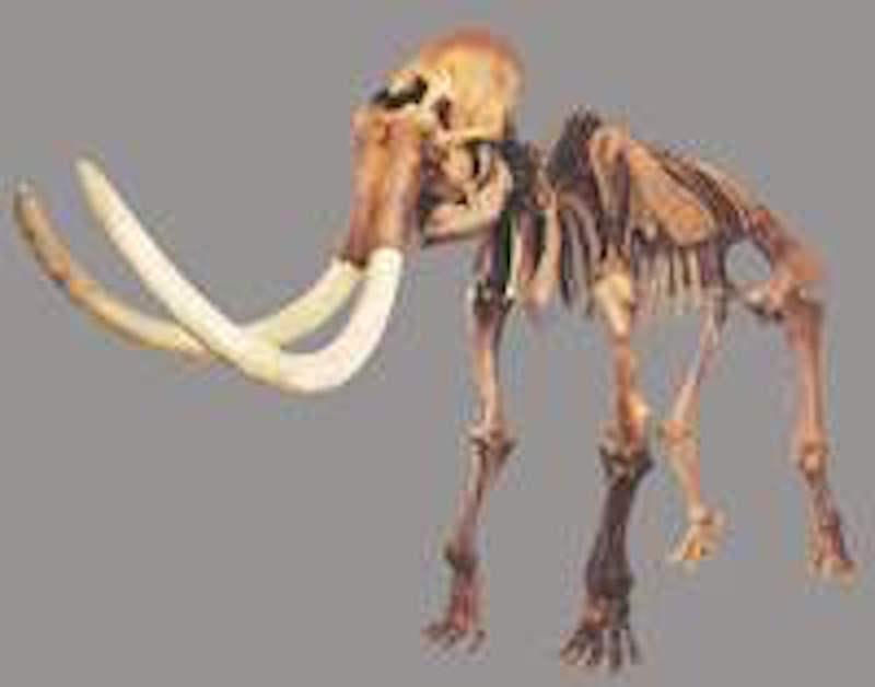 Mammutmuseum Niederwenigen