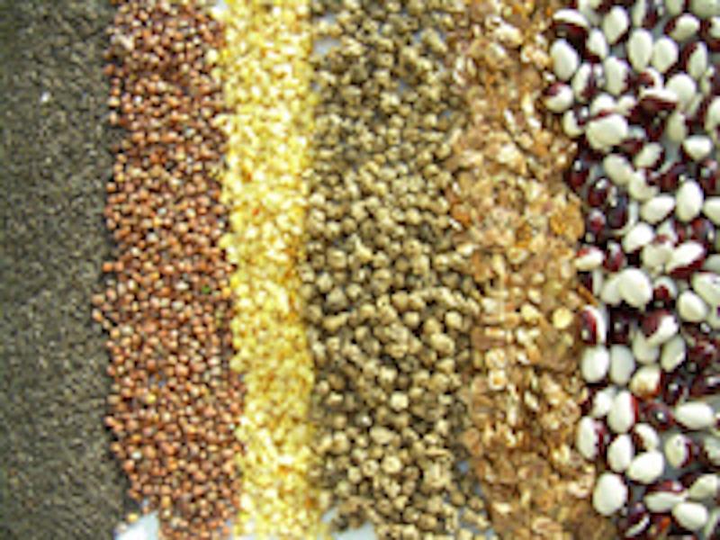 Ernten, um zu säen – Saatgutproduktion für Nutzpflanzen
