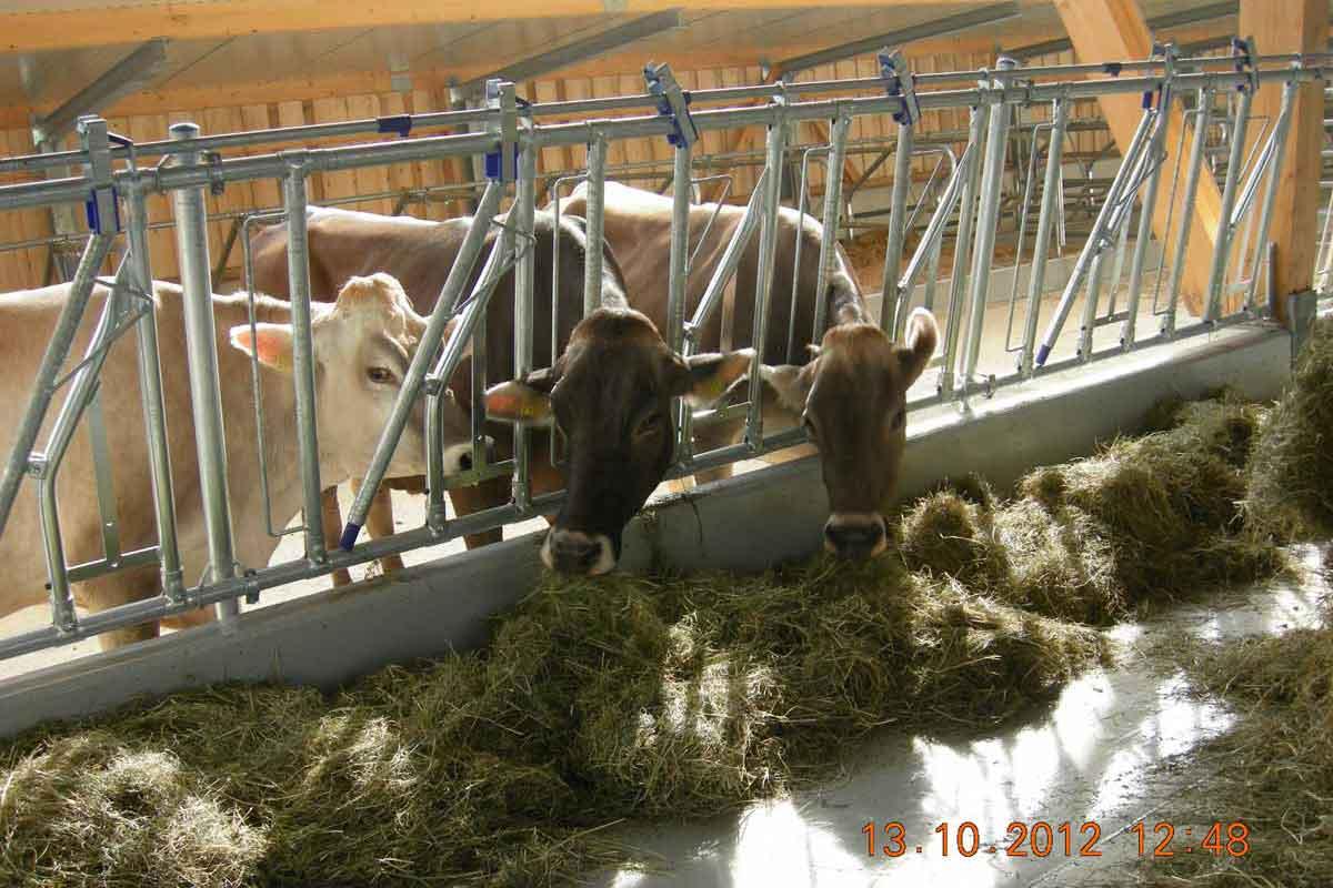 Bauernhof der Zukunft – Zwischen Rentabilität, Natur-, Umwelt- und Tierschutz