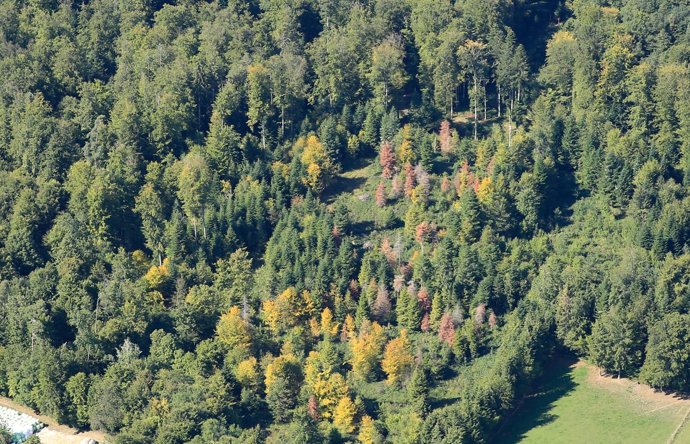 Neue biotische Bedrohungen für den Wald