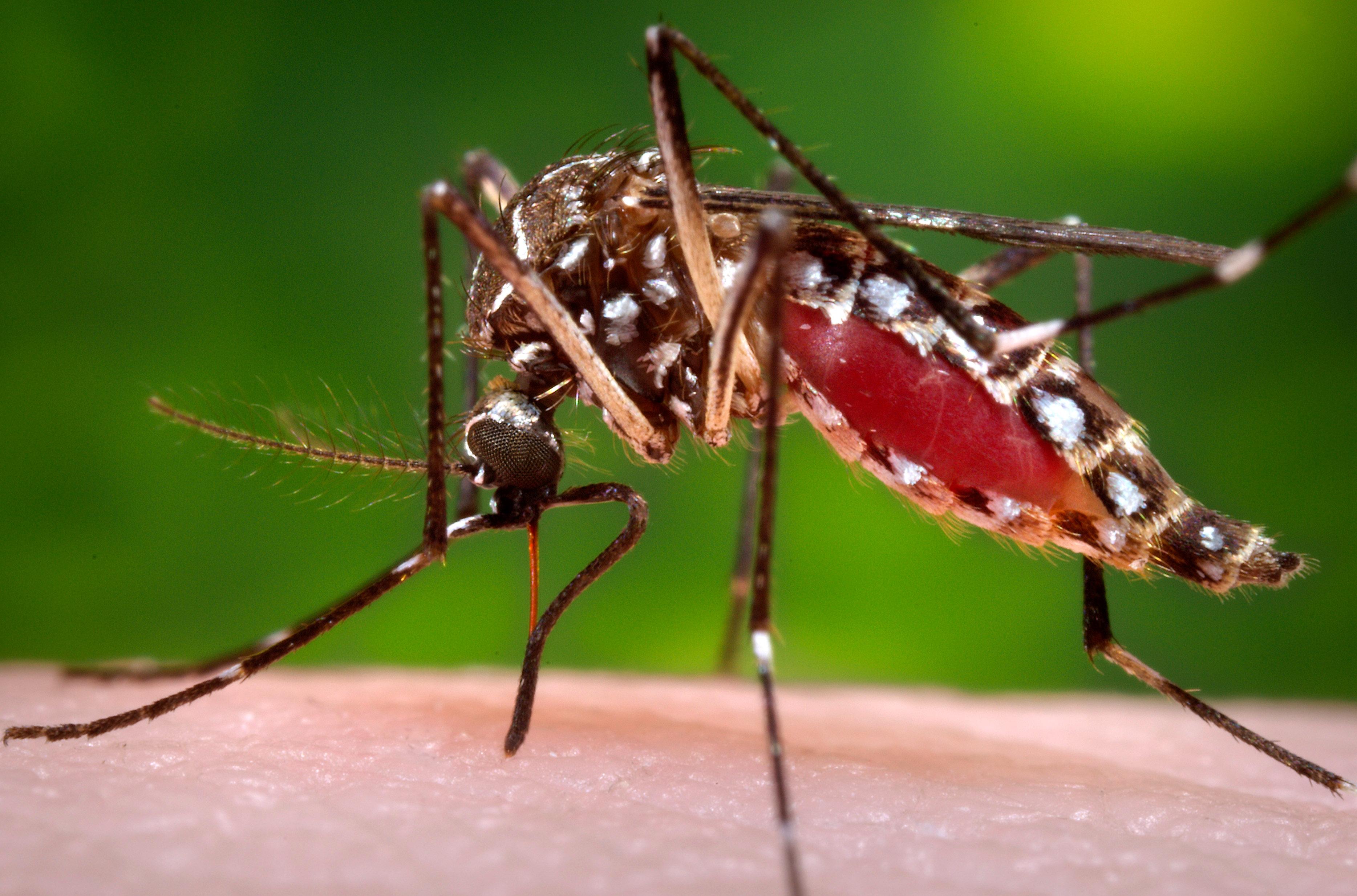 Alte und neue Krankheiten: Von Malaria bis Ebola und Zika