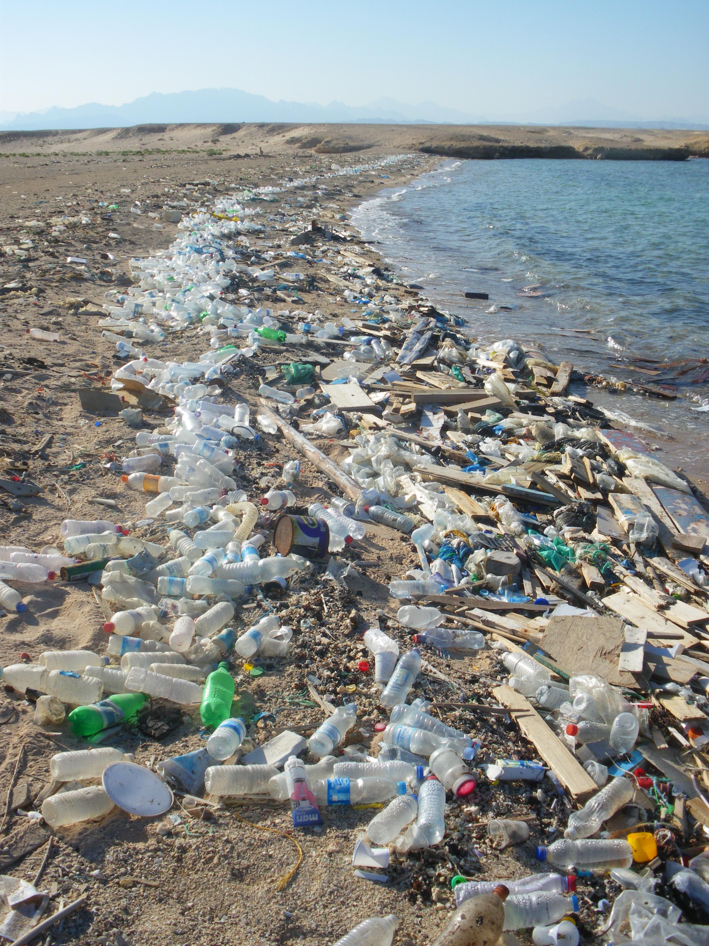 Ein Meer voller Plastik – was bedeutet dies für Wale und Delfine?