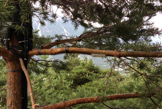 Das «Flüstern» der Bäume