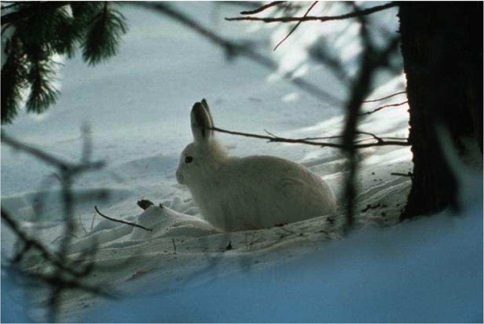 So überstehen Säugetiere den Winter