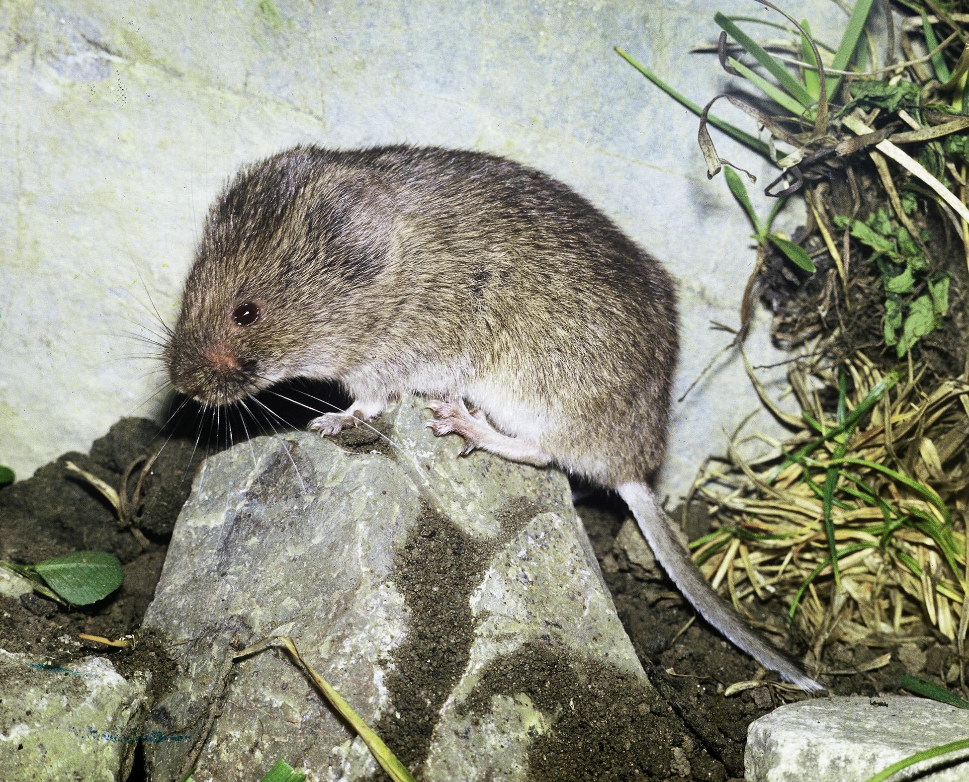 Nur eine Maus! Das verborgene Leben der kleinen Säugetiere