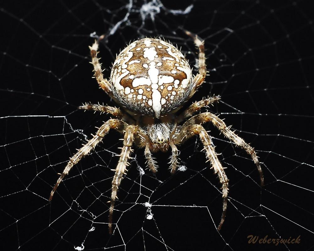 Spinnen – Die tollsten Tiere überhaupt