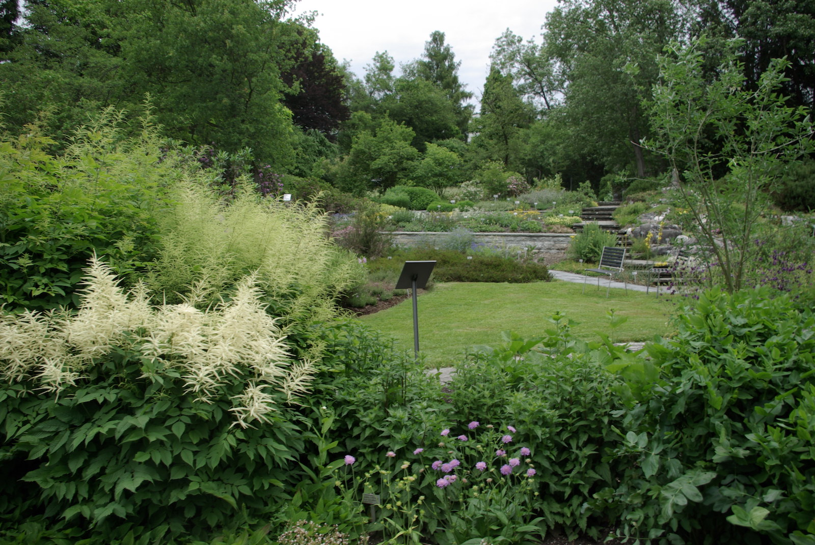 Botanischer Garten und Naturmuseum St. Gallen