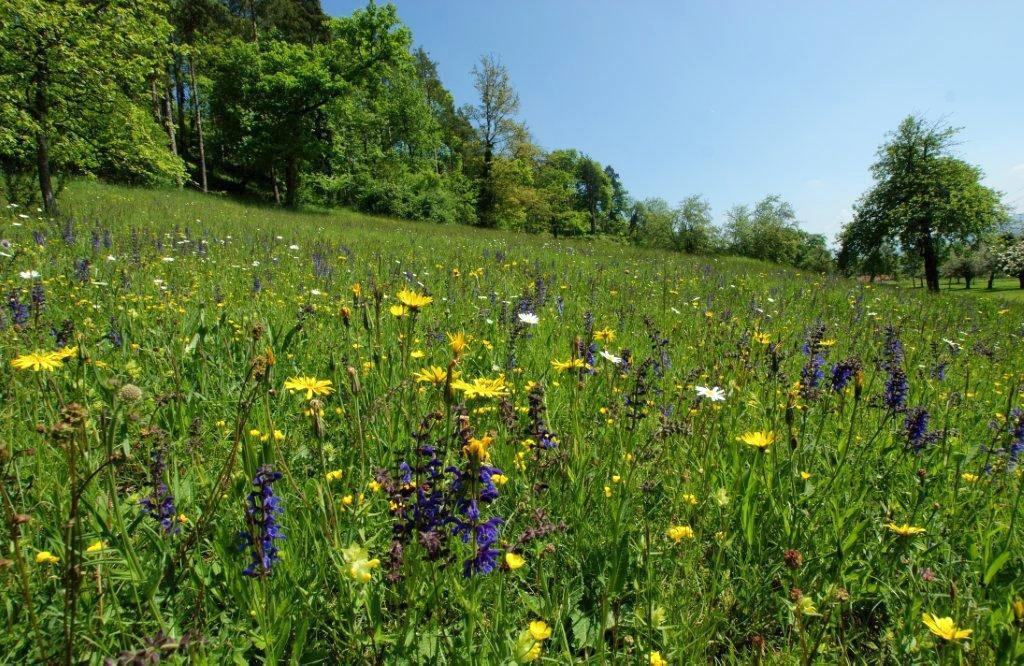 Immenberg – Ein Hotspot der Biodiversität