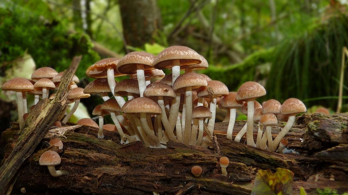 Das geheimnisvolle Leben von Pilzen