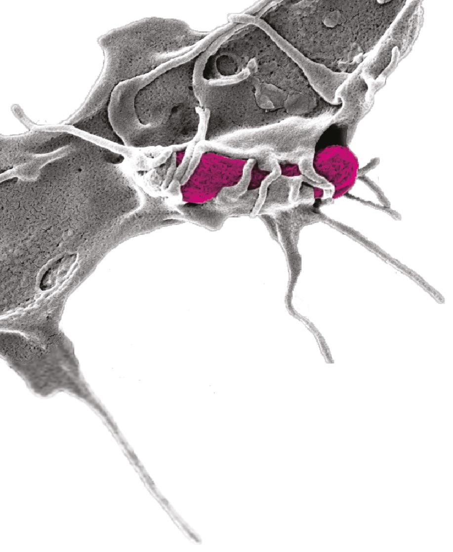 Mechanobiologie – Neuer Antrieb für vielfältige Innovationen in der Medizin